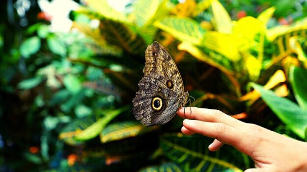 """Joven crea jardines desde los 4 años para preservar las mariposas: """"Si desaparecen, todo le seguirá"""""""