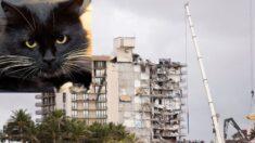 "Gato que vivía en 9° piso de Champlain Towers se reencuentra con sus dueños: ""Un rayo de esperanza"""