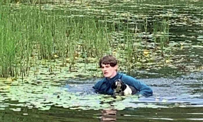 """Joven turista salva a un perro de morir ahogado en un lago, convirtiéndose en """"héroe"""""""