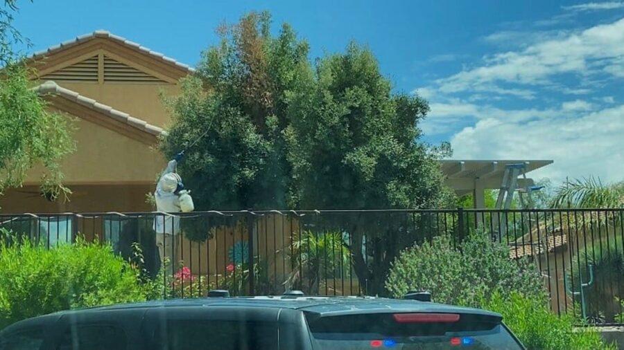 Ataque de un enjambre de abejas mata a un hombre de Arizona y deja con lesiones a cinco personas