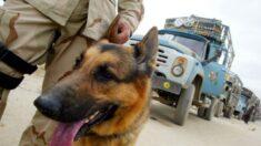 Exmarine del Reino Unido que sacó a animales de Kabul dice que su personal ya está a salvo