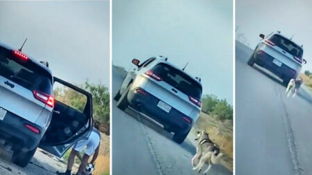 Perrito husky corre detrás del auto de su dueño tras ser abandonado y una familia le da un nuevo hogar