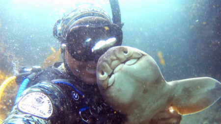Buceador que abrazó a tiburón bebé 11 años atrás se reencuentra con su amiga submarina