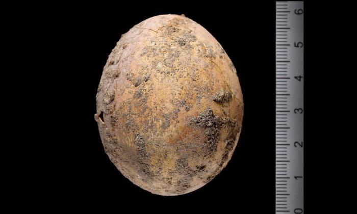 Arqueólogos encuentran huevo de gallina intacto de 1000 años de antigüedad en excavación en Israel