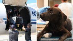 Cientos de perros y gatos fueron evacuados a tiempo antes de que huracán Ida golpeara Luisiana