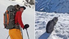 Gatica perdida sigue a un par de excursionistas hasta la cima de una montaña suiza de 3073 metros