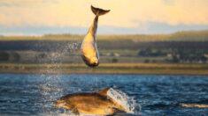 Impresionantes imágenes de una pareja de delfines haciendo acrobacias durante el atardecer