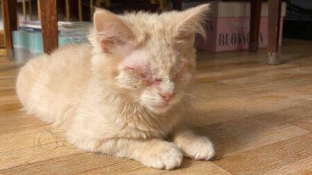 """Gatita ciega sin ojos es adoptada por amorosa familia: """"No es imperfecta, simplemente es diferente"""""""