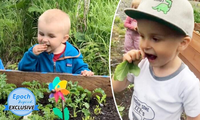 Niño de 4 años come verduras directamente de la huerta: ¡Sabe de memoria los datos nutricionales!