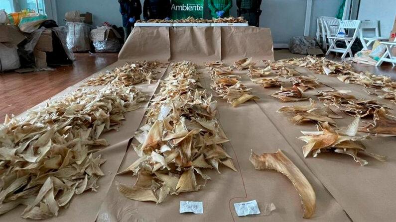 Fotografía fechada el 23 de septiembre y cedida por la Secretaría del Medioambiente de Bogotá que muestra aletas de tiburón incautadas en Bogotá (Colombia). EFE/ Secretaría Medioambiente