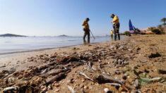 Aparecen miles de peces muertos en la laguna española Mar Menor