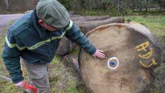 Importación masiva de madera por parte de China provoca alarma en industria forestal mundial