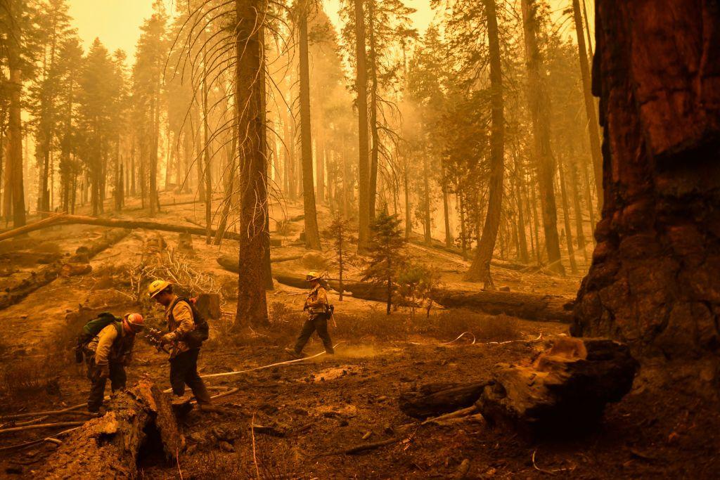 Miles de bomberos tratan de proteger del fuego a las secuoyas californianas