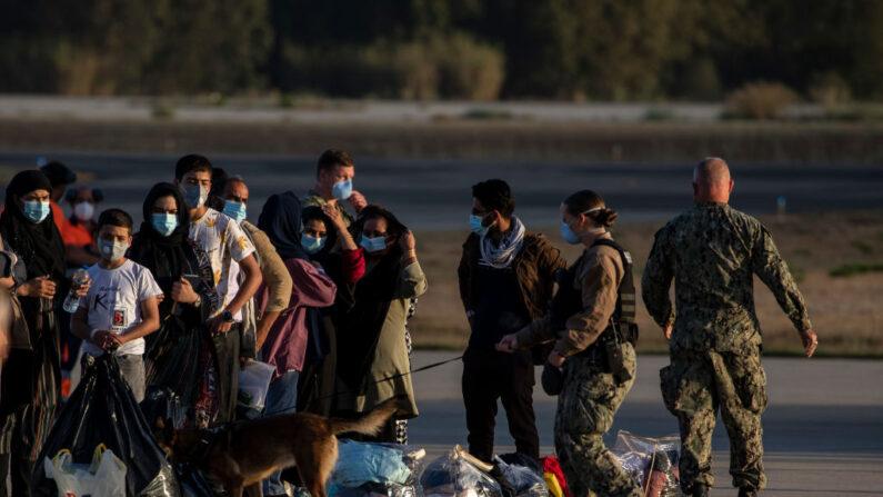 Un perro policía revisa el equipaje de los evacuados afganos después de desembarcar de un avión de la Fuerza Aérea de EE.UU., en la Base Naval de Rota, el 31 de agosto de 2021, en Rota, España. (Pablo Blazquez Dominguez/Getty Images)