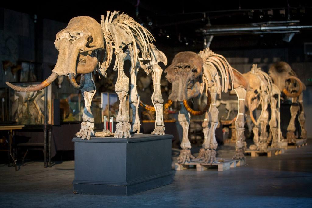 Hallan costillas de mamut de hace un millón de años en Cataluña (España)