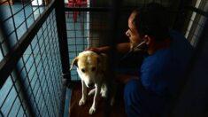 ¡Misión cumplida!: 68 empleados de refugio de animales fundado por exmarine salen de Afganistán