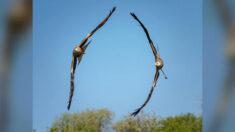 Fotógrafo capta sorprendente imagen de dos águilas volando en perfecta formación