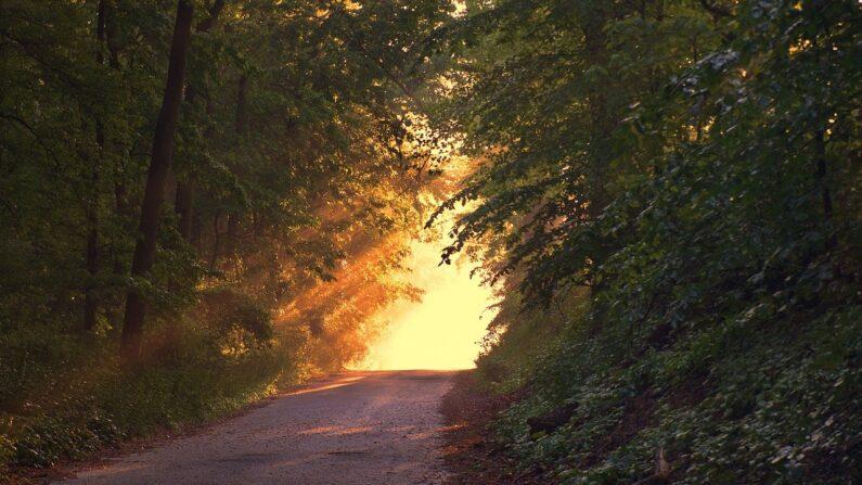Mirando a la naturaleza, podemos encontrar la huella de lo divino. (Imagen de Jim Semonik en Pixabay)