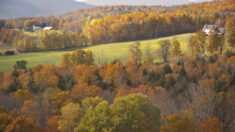 Las hojas musicales del otoño: una breve lista de reproducción
