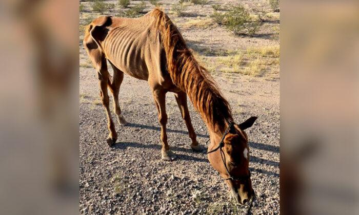 """Rescatan justo a tiempo a una yegua abandonada a su suerte en el desierto: """"Era un esqueleto andante"""""""