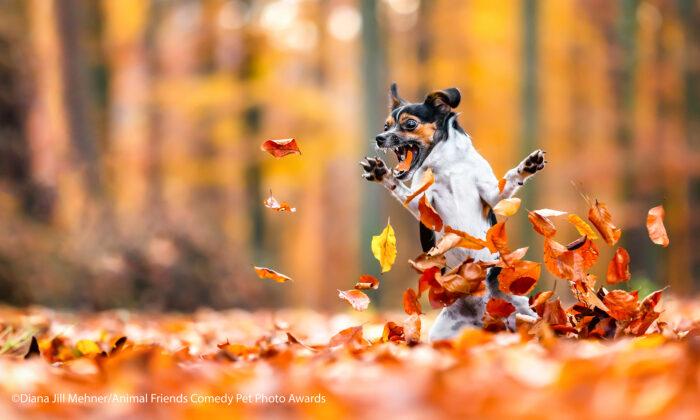 Concurso de fotografía de mascotas comparte sus mejores imágenes ¡son muy divertidas!
