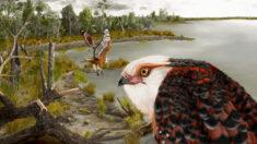 Científicos australianos descubren fósil de águila de hace 25 millones de años