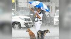 Policía de tráfico protege bajo su paraguas a dos perros empapados durante una fuerte lluvia