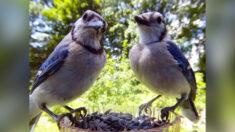 Mujer instala cámara en comedero de su jardín para tomar hermosas fotos de las aves