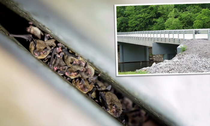 Construyen puente adaptado para albergar a miles de murciélagos en peligro de extinción