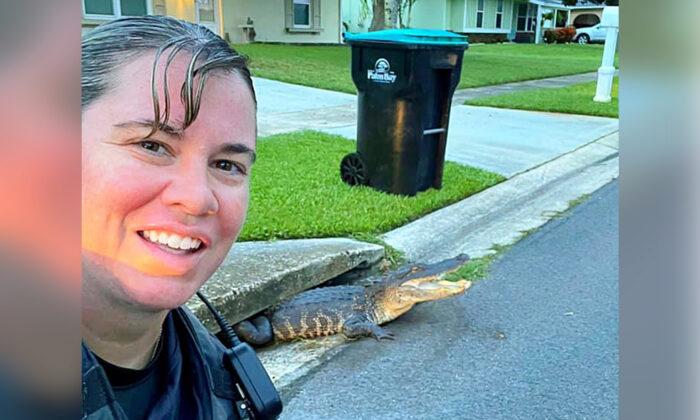 Policía de Florida se toma selfie con caimán sonriente en una alcantarilla