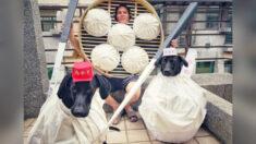 Canadiense en Taiwán festeja Halloween con divertidos disfraces, incluyendo a sus adorables perros