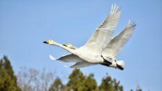 Recuento de aves: una oportunidad para conectar con la naturaleza