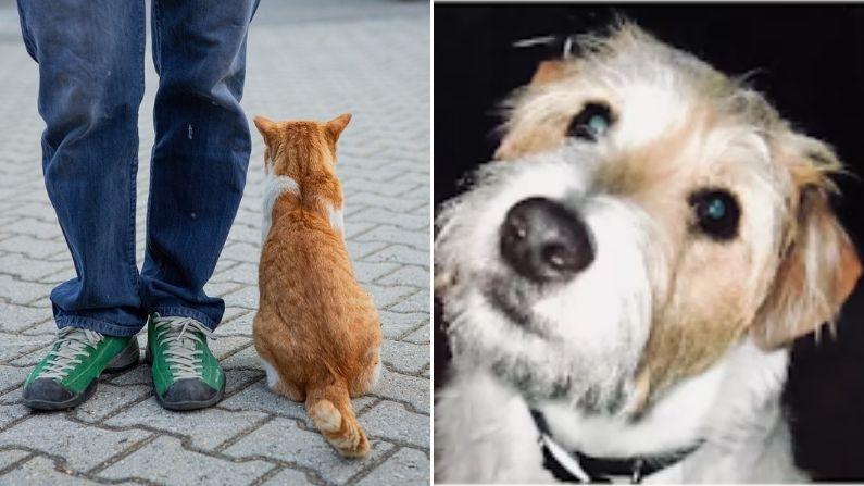 Hombre, su gato y su fiel perro, que una vez le salvó la vida, mueren con meses de diferencia