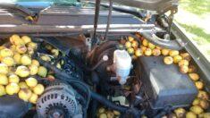 Hombre encuentra 180 libras de nueces escondidas por una ardilla dentro de su auto