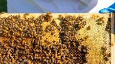 Morgan Freeman transforma seu rancho de 50 hectares em 'santuário' para salvar abelhas
