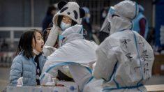 Virus del PCCh: OMS inicia en Wuhan estudio sobre el origen mientras China intenta evadir culpas